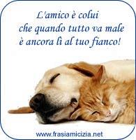 Frase Amicizia Cane e Gatto